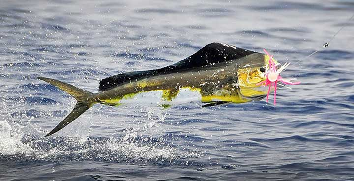Offshore Fishing Spots in Fort Lauderdale Florida
