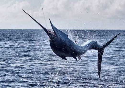 Palm Beach Florida Fishing Spots