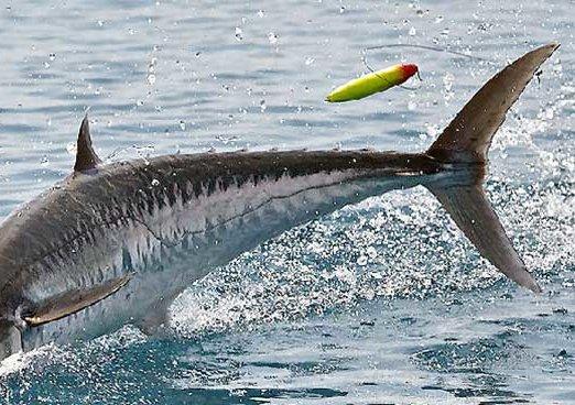 Florida Offshore Fishing Spots