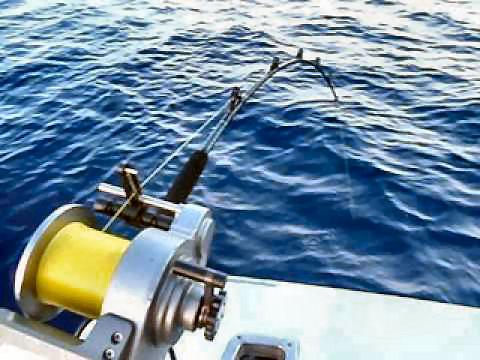 Deep Drop Fishing Spots Reel