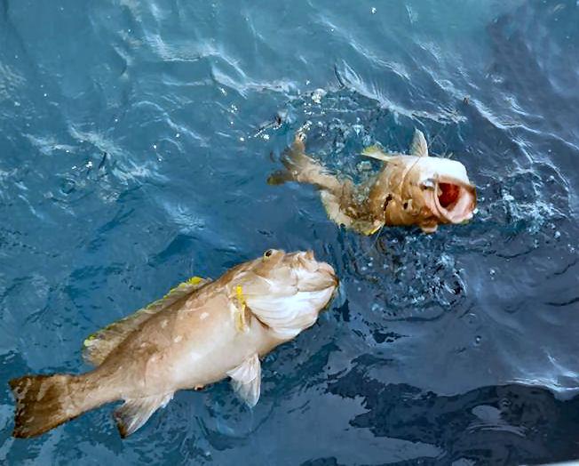 Miami florida deep drop fishing spots florida fishing for Fishing spots in miami