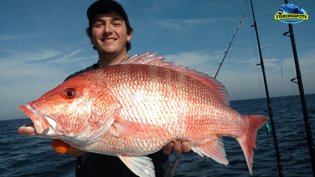 Tampa Offshore Fishing for Red Snapper with FL Fishing Spots